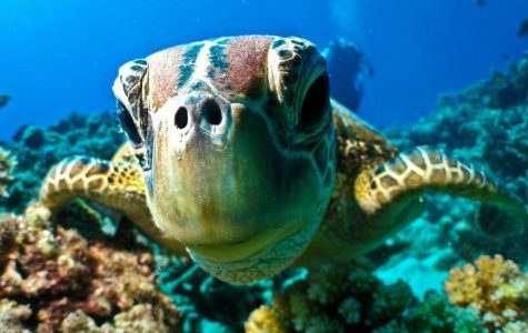 The death of the Great Barrier Reef: what is says about our compassion as a society