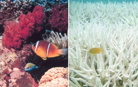 Stop coral bleaching 2016