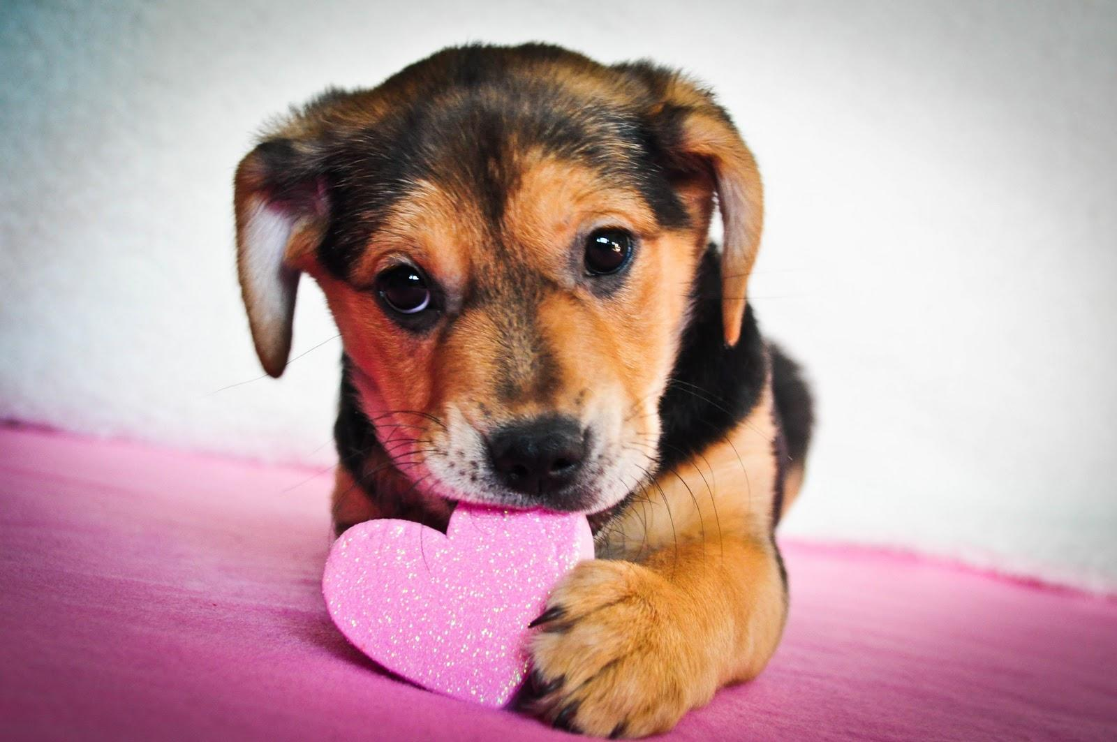 If you are single on Valentine's Day, all you need is a puppy!