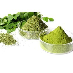 Moringa powder is a great addition to a smoothie.