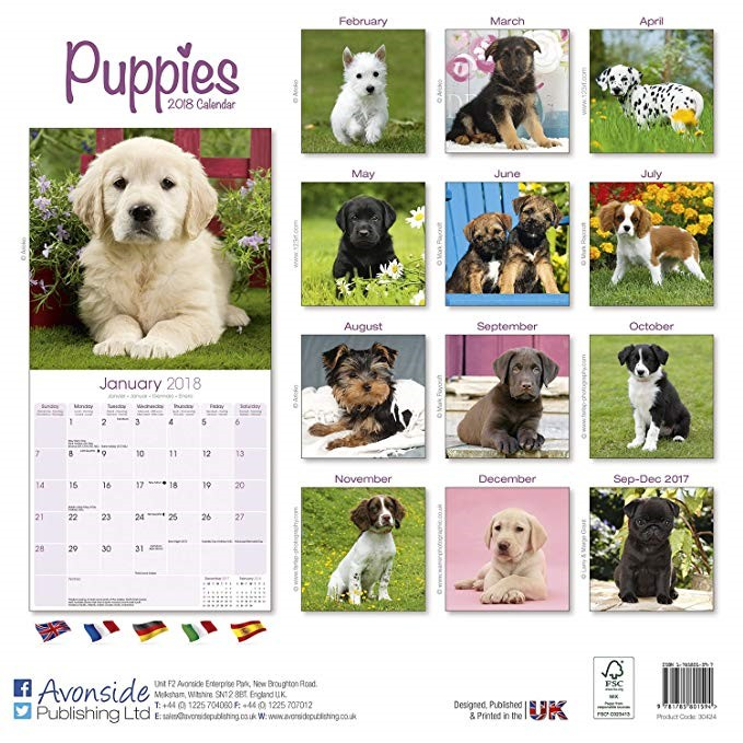 Keeping+track+of+all+these+holidays+can+be+hard%2C+but+it+would+be+much+easier+with+an+adorable+puppy+calendar+%28purchase+one+at+https%3A%2F%2Fwww.amazon.com%2FPuppies-Calendar-Animals-Calendars-Avonside%2Fdp%2F1782088741%29+