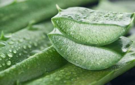 The Most Effective Natural Hero: Aloe Vera