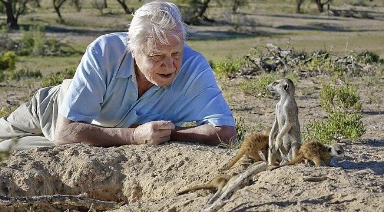Pictured here is David Attenborough, one of the chief narrators for almost all of BBC's documentaries. (BBC.com)