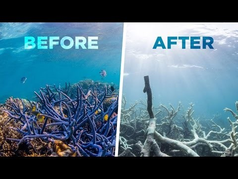A representation of the devastating affects of coral bleaching.
