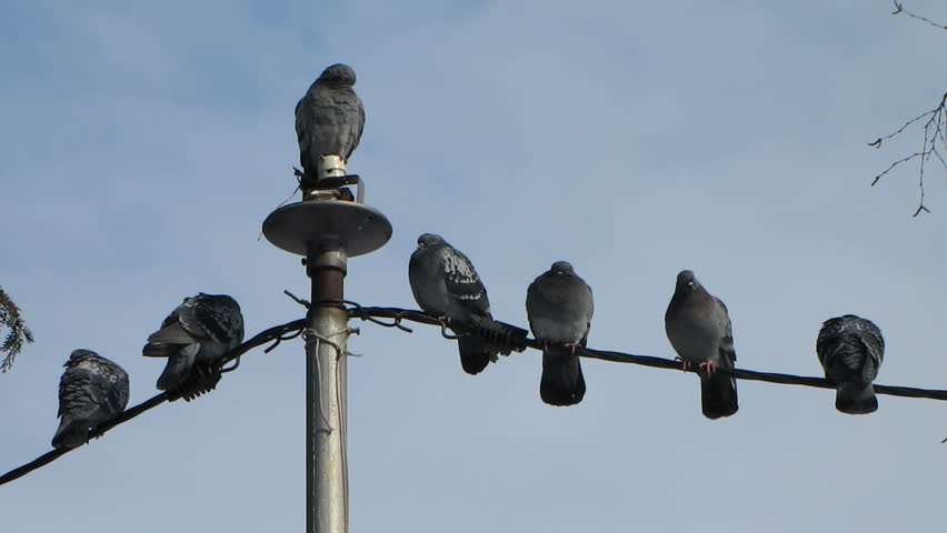 atop+sits+the+pigeon%2C+watching+our+every+move%2C+it%E2%80%99s+ok+doubt+me+now