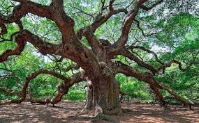 Look at this unique beauty, now that's a snazzy tree if I've ever seen one