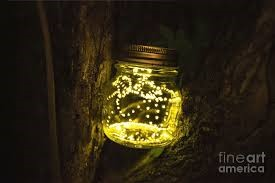Fireflies face extinction
