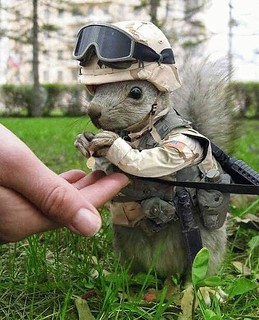 This is the fearless leader of the squirrel army, Commander bushy-tail. Avoid contact at all cost!